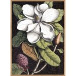 The Dybdahl Co. - Blooming White Magnolia