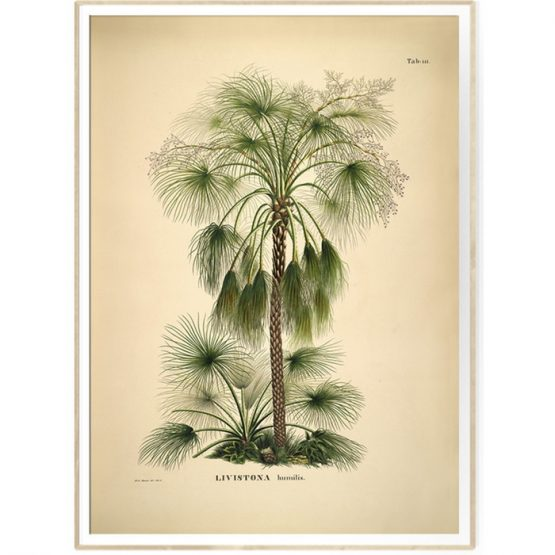 BOTANICAL PALM PRINT FRA THE DYBDAHL