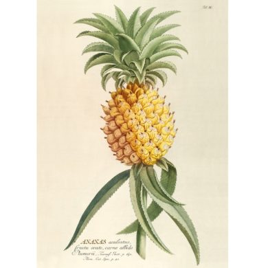 Ananas Fra The Dybdahl