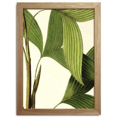 Plants Print Fra The Dybdahl