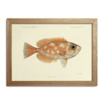 The Dybdahl Co. - Fishes Print Orange delight