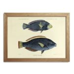 The Dybdahl Co. - Fishes Print - To be blue or...