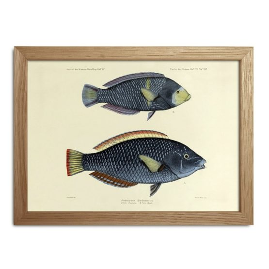 Fishes Print Fra The Dybdahl