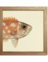 Half Fishes Print Fra The Dybdahl