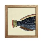 The Dybdahl - Half Fishes Print - She wore blue….fish tail?