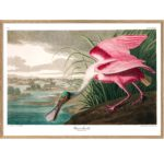 The Dybdahl Co. - Roseate Spoonbill