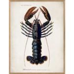 The Dybdahl Co. - Lobster - plakat